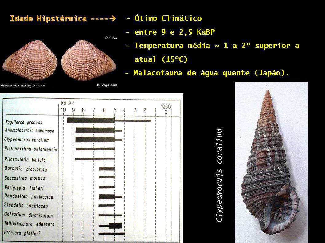 Idade Hipstérmica ---- Idade Hipstérmica ---- - Ótimo Climático - entre 9 e 2,5 KaBP - Temperatura média ~ 1 a 2º superior a atual (15ºC) - Malacofaun