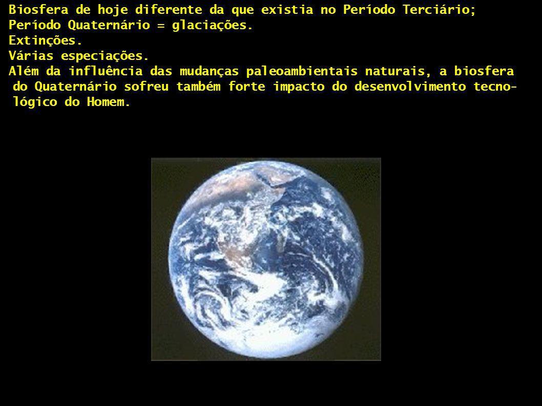 - Biosfera de hoje diferente da que existia no Período Terciário; - Período Quaternário = glaciações. - Extinções. - Várias especiações. - Além da inf