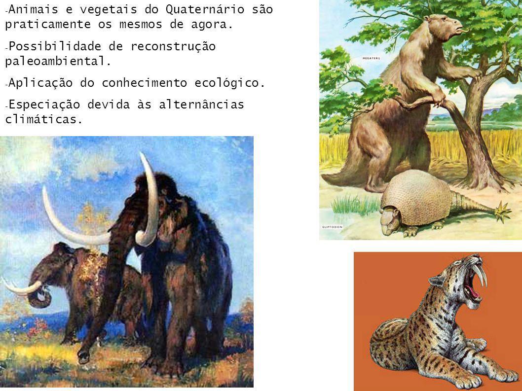 - Animais e vegetais do Quaternário são praticamente os mesmos de agora. - Possibilidade de reconstrução paleoambiental. - Aplicação do conhecimento e