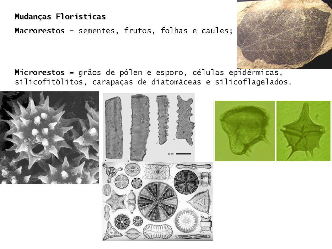 Mudanças Florísticas Macrorestos = sementes, frutos, folhas e caules; Microrestos = grãos de pólen e esporo, células epidérmicas, silicofitólitos, car