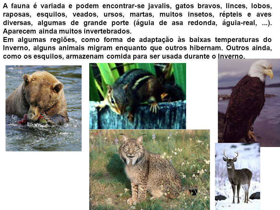 A fauna é variada e podem encontrar-se javalis, gatos bravos, linces, lobos, raposas, esquilos, veados, ursos, martas, muitos insetos, répteis e aves