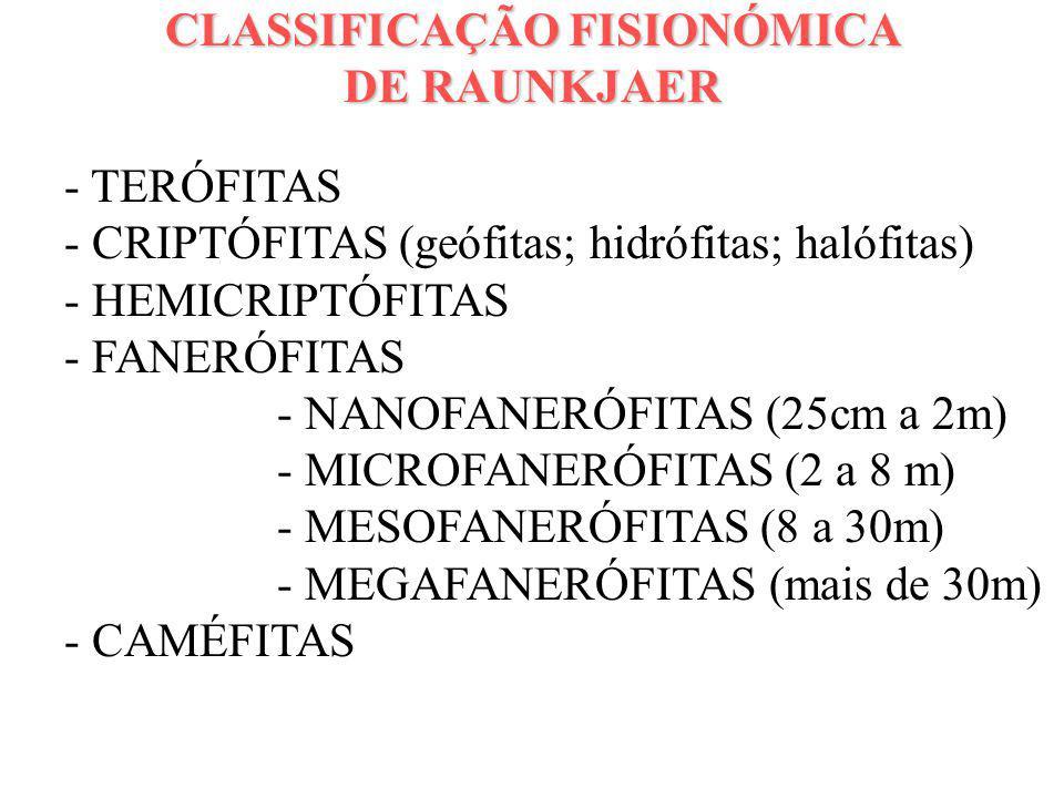 CLASSIFICAÇÃO FISIONÓMICA DE RAUNKJAER - TERÓFITAS - CRIPTÓFITAS (geófitas; hidrófitas; halófitas) - HEMICRIPTÓFITAS - FANERÓFITAS - NANOFANERÓFITAS (
