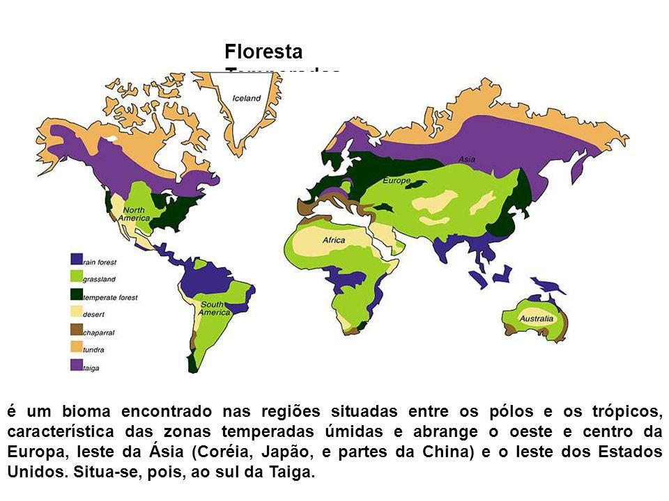 Floresta Temperadas é um bioma encontrado nas regiões situadas entre os pólos e os trópicos, característica das zonas temperadas úmidas e abrange o oe