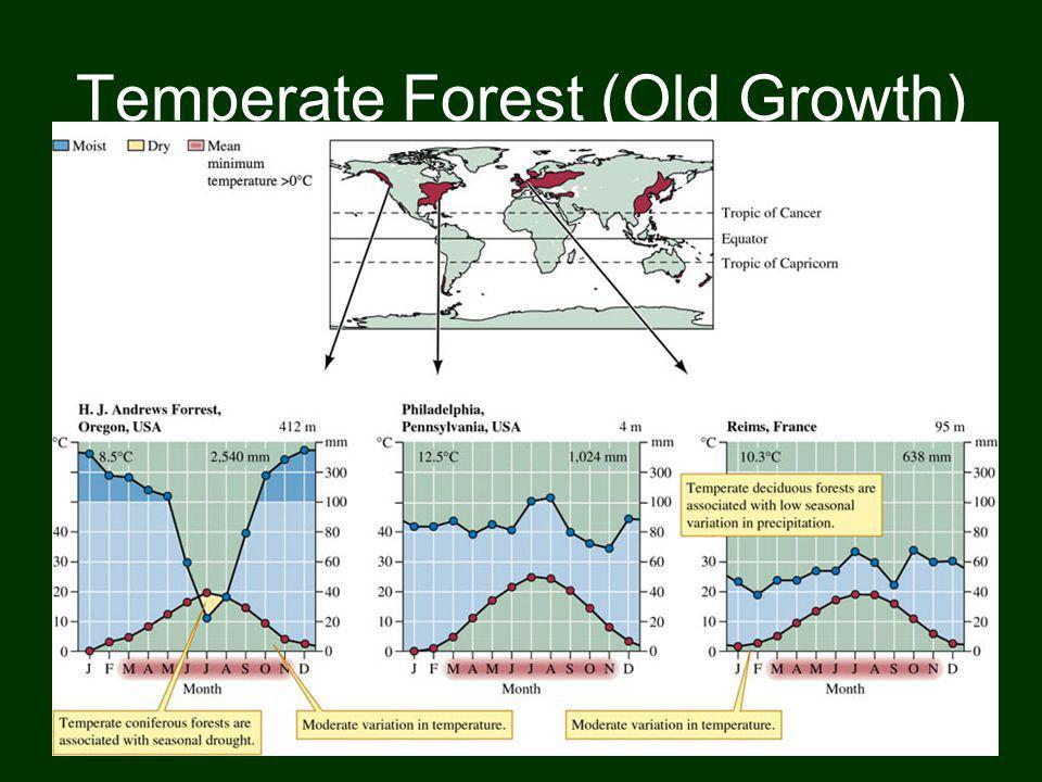 A energia solar que vai incidindo nas regiões de florestas temperadas é maior do que, por exemplo, nas tundras, e consegue atingir mais facilmente o solo, pois existem espaços maiores entre a copa das árvores do que, por exemplo, nas florestas tropicais.