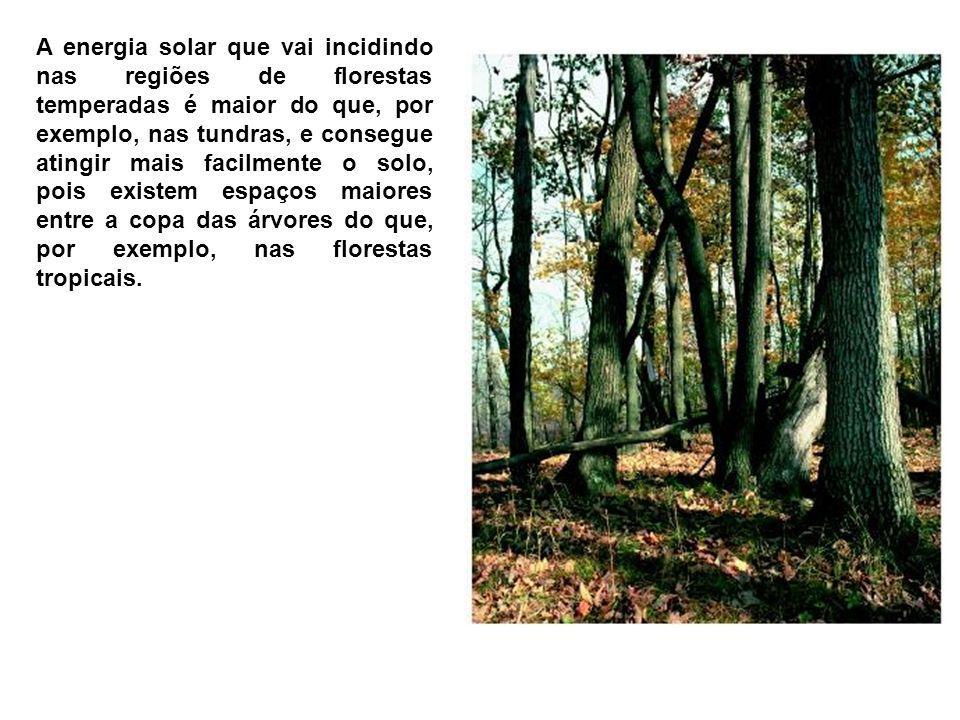 A energia solar que vai incidindo nas regiões de florestas temperadas é maior do que, por exemplo, nas tundras, e consegue atingir mais facilmente o s