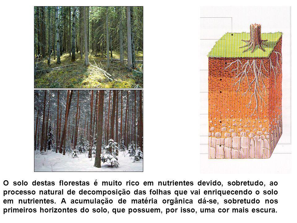 O solo destas florestas é muito rico em nutrientes devido, sobretudo, ao processo natural de decomposição das folhas que vai enriquecendo o solo em nu