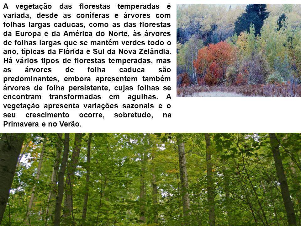 A vegetação das florestas temperadas é variada, desde as coníferas e árvores com folhas largas caducas, como as das florestas da Europa e da América d