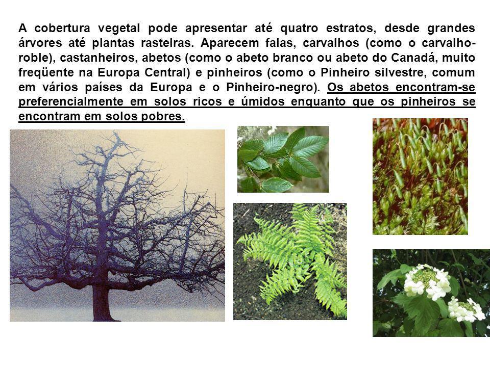 A cobertura vegetal pode apresentar até quatro estratos, desde grandes árvores até plantas rasteiras. Aparecem faias, carvalhos (como o carvalho- robl