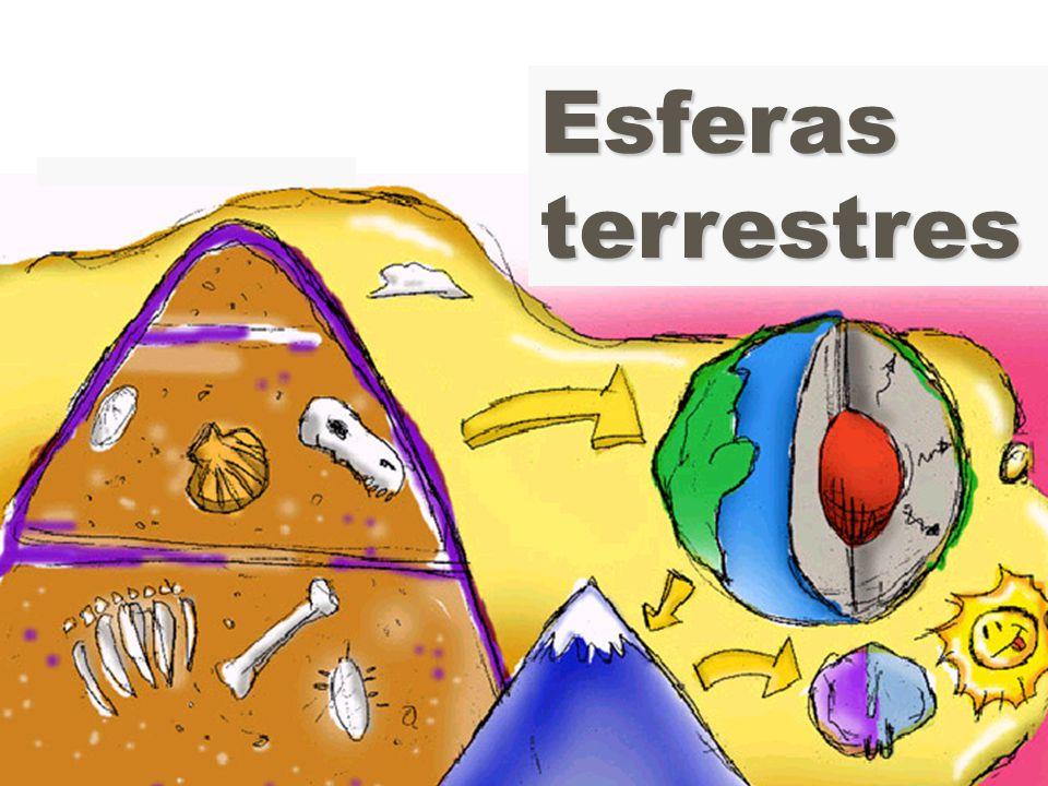 A camada da vida: ecosfera zEcosfera: finíssima camada situada entre o topo da litosfera e a atmosfera.