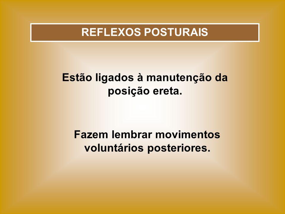 REFLEXOS POSTURAIS Estão ligados à manutenção da posição ereta. Fazem lembrar movimentos voluntários posteriores.