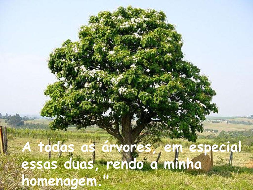 A natureza precisa ser preservada, para que as árvores nunca deixem de existir. Plante, também, uma árvore no quintal do seu coração.