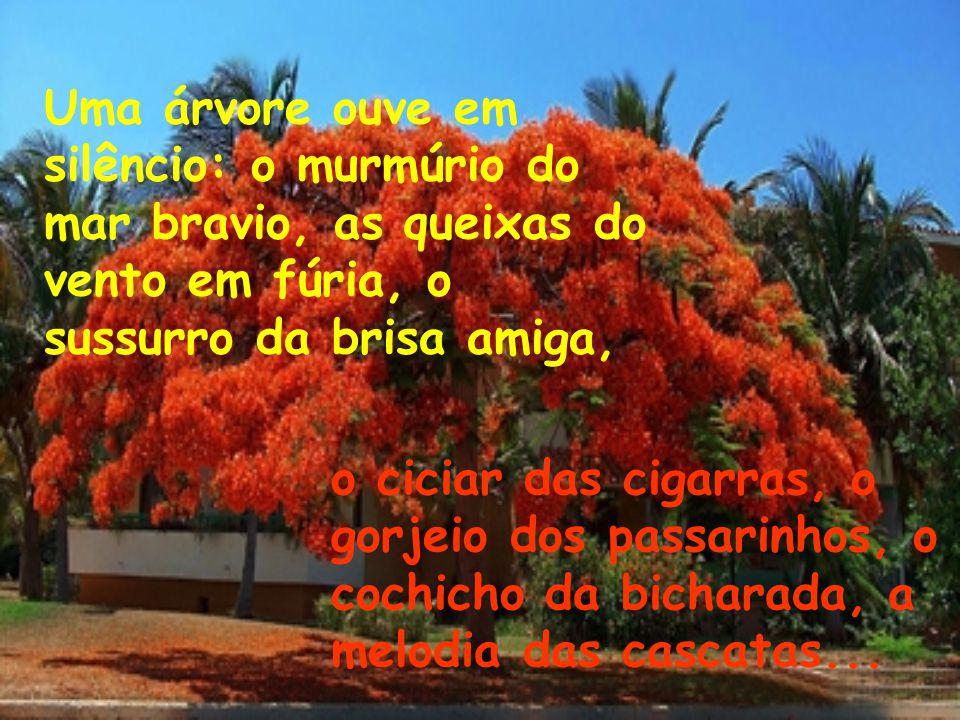 Uma árvore dá sombra, oferece abrigo, protege nas tempestades, alimenta com seus frutos e até sustenta, através dos seus galhos frondosos, os seres qu