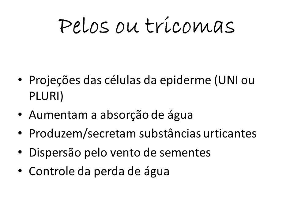 Pelos ou tricomas Projeções das células da epiderme (UNI ou PLURI) Aumentam a absorção de água Produzem/secretam substâncias urticantes Dispersão pelo