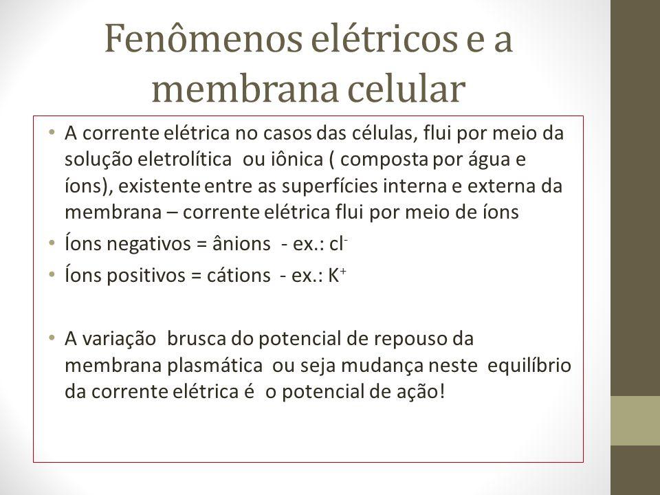 Fenômenos elétricos e a membrana celular A corrente elétrica no casos das células, flui por meio da solução eletrolítica ou iônica ( composta por água e íons), existente entre as superfícies interna e externa da membrana – corrente elétrica flui por meio de íons Íons negativos = ânions - ex.: cl - Íons positivos = cátions - ex.: K + A variação brusca do potencial de repouso da membrana plasmática ou seja mudança neste equilíbrio da corrente elétrica é o potencial de ação!