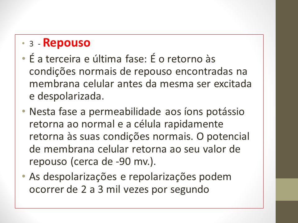 3 - Repouso É a terceira e última fase: É o retorno às condições normais de repouso encontradas na membrana celular antes da mesma ser excitada e despolarizada.