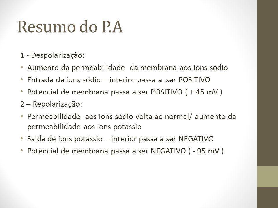 Resumo do P.A 1 - Despolarização: Aumento da permeabilidade da membrana aos íons sódio Entrada de íons sódio – interior passa a ser POSITIVO Potencial de membrana passa a ser POSITIVO ( + 45 mV ) 2 – Repolarização: Permeabilidade aos íons sódio volta ao normal/ aumento da permeabilidade aos ions potássio Saída de íons potássio – interior passa a ser NEGATIVO Potencial de membrana passa a ser NEGATIVO ( - 95 mV )