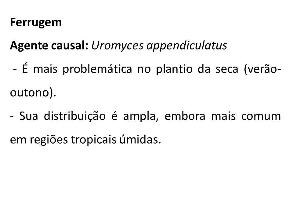 Ferrugem Agente causal: Uromyces appendiculatus - É mais problemática no plantio da seca (verão- outono). - Sua distribuição é ampla, embora mais comu