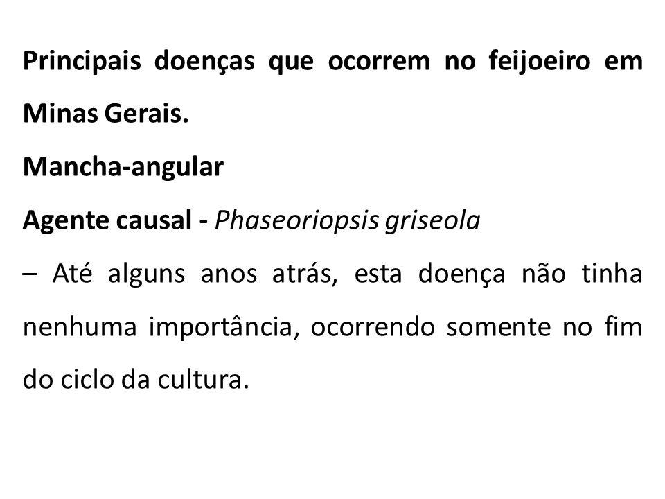 Principais doenças que ocorrem no feijoeiro em Minas Gerais. Mancha-angular Agente causal - Phaseoriopsis griseola – Até alguns anos atrás, esta doenç