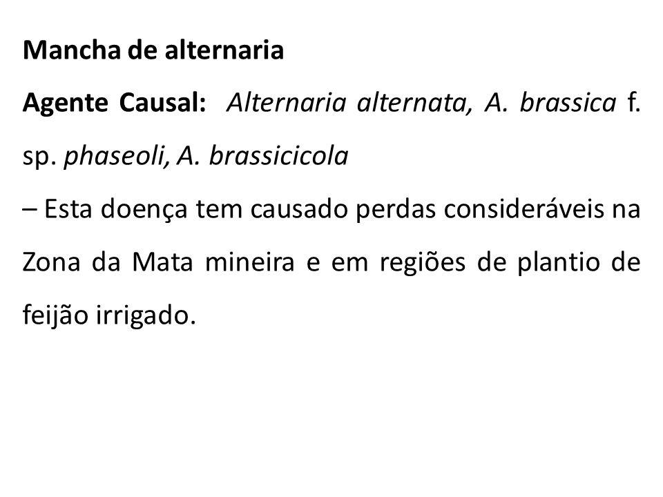 Mancha de alternaria Agente Causal: Alternaria alternata, A. brassica f. sp. phaseoli, A. brassicicola – Esta doença tem causado perdas consideráveis
