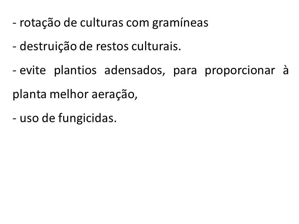 - rotação de culturas com gramíneas - destruição de restos culturais. - evite plantios adensados, para proporcionar à planta melhor aeração, - uso de