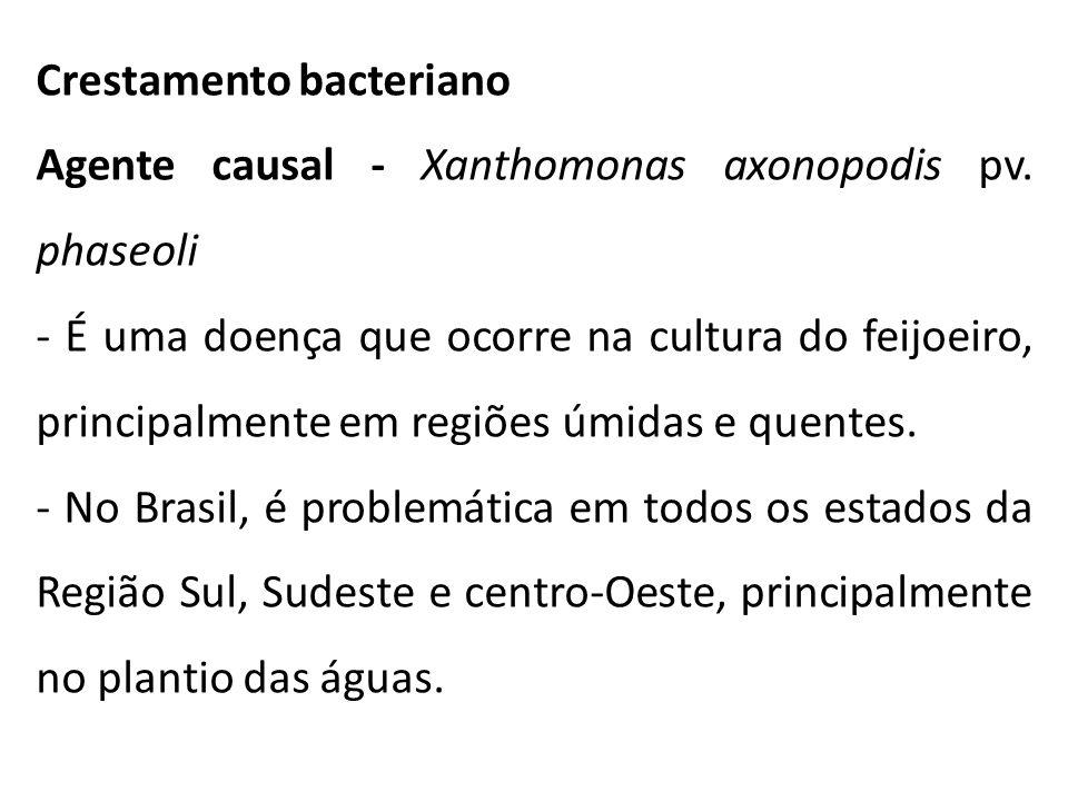Crestamento bacteriano Agente causal - Xanthomonas axonopodis pv. phaseoli - É uma doença que ocorre na cultura do feijoeiro, principalmente em regiõe