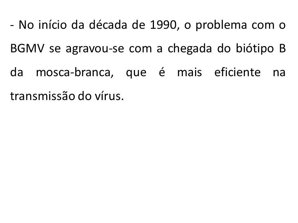 - No início da década de 1990, o problema com o BGMV se agravou-se com a chegada do biótipo B da mosca-branca, que é mais eficiente na transmissão do