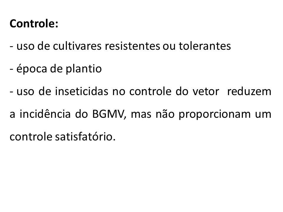 Controle: - uso de cultivares resistentes ou tolerantes - época de plantio - uso de inseticidas no controle do vetor reduzem a incidência do BGMV, mas