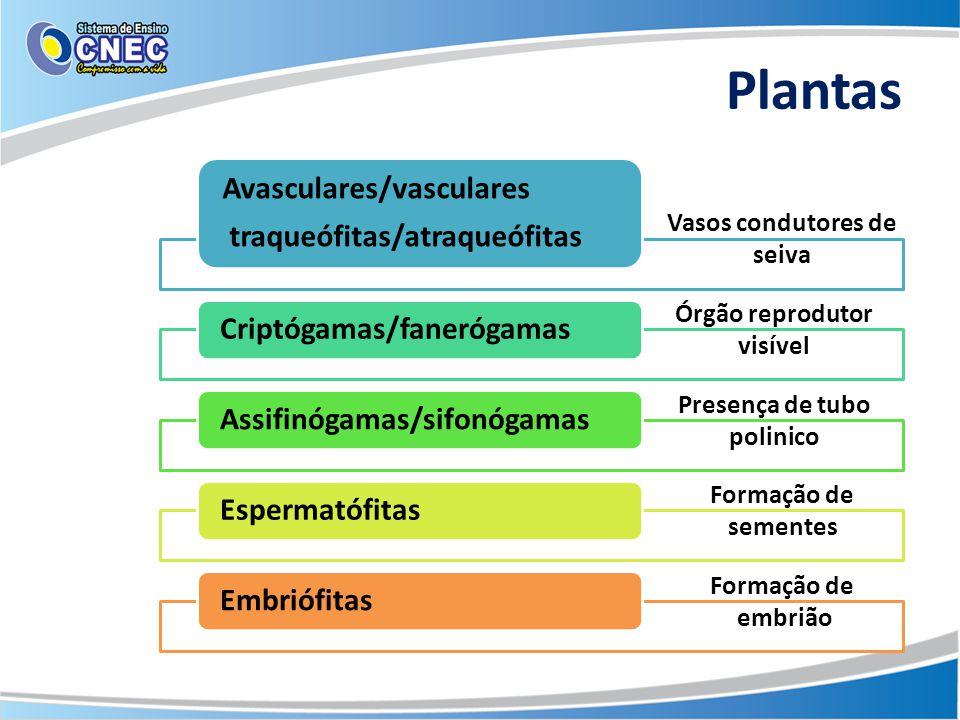 Plantas Avasculares/vasculares traqueófitas/atraqueófitas Criptógamas/fanerógamasAssifinógamas/sifonógamasEspermatófitasEmbriófitas Vasos condutores d