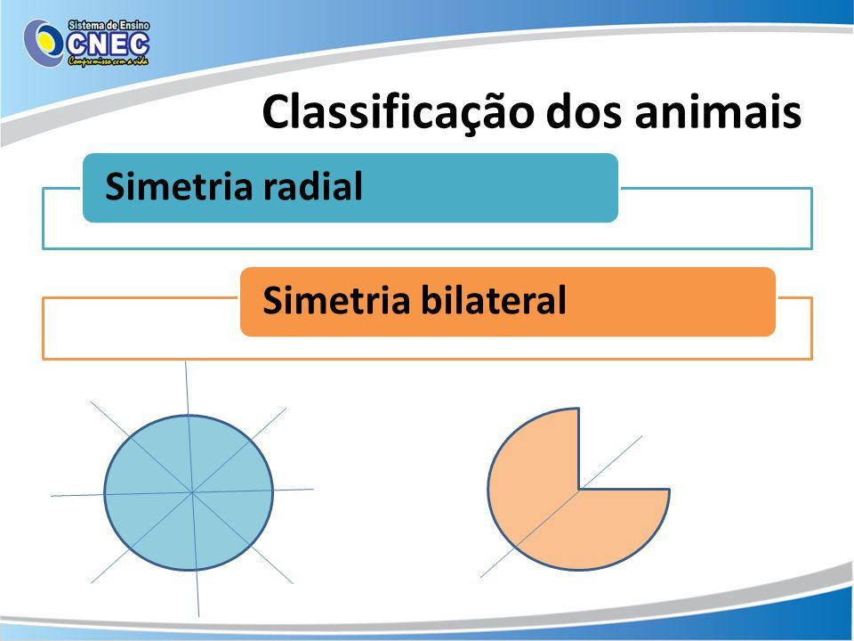 Classificação dos animais Simetria radialSimetria bilateral