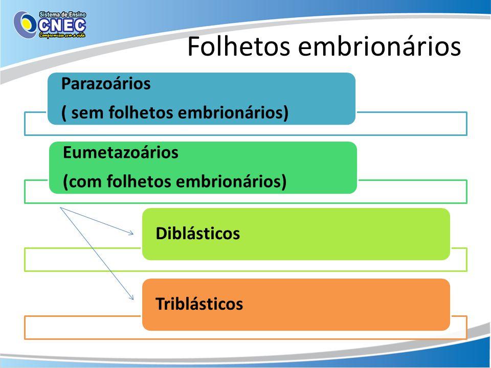 Folhetos embrionários Parazoários ( sem folhetos embrionários) Eumetazoários (com folhetos embrionários) DiblásticosTriblásticos