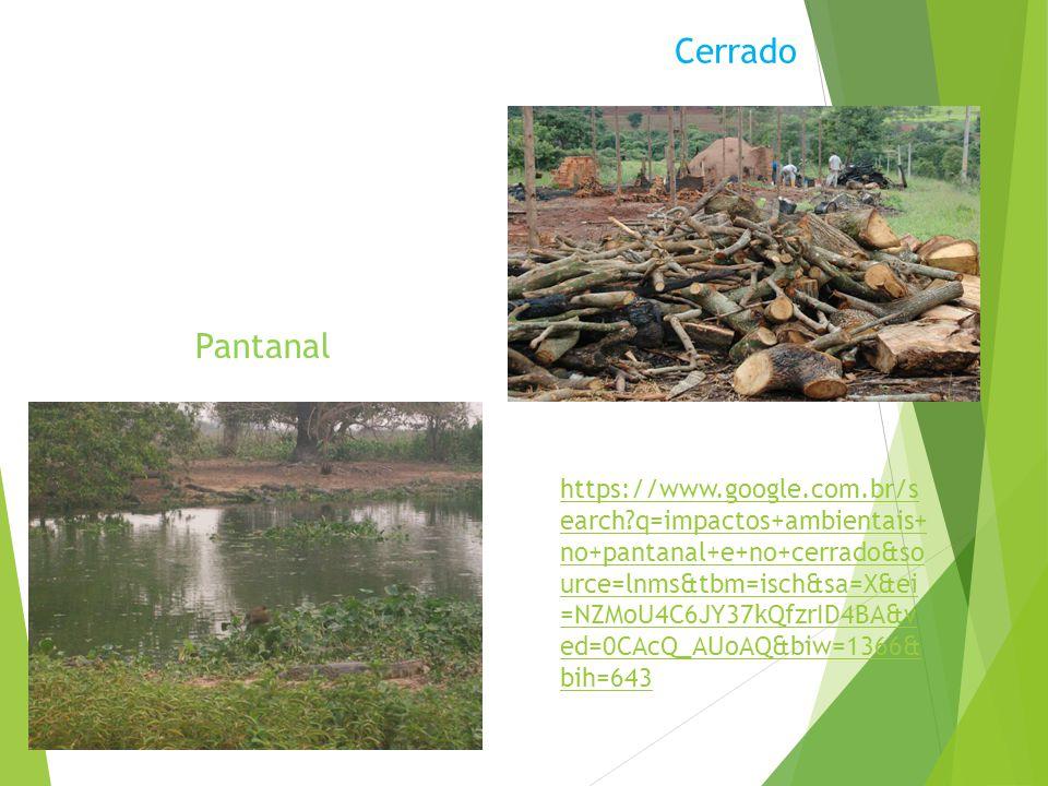 Cerrado Cerrado : Depois da Mata Atlântica o Cerrado e o segundo mais sofre alteração humana. Um dos impactos ambientais mais graves na região foi cau