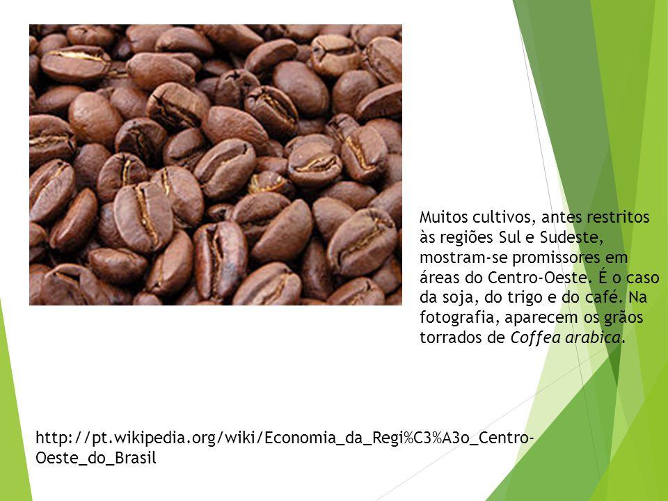Setor primário Agricultura. A agricultura de subsistência, com o cultivo de milho, mandioca, abóbora, feijão e arroz, através de técnicas primitivas,