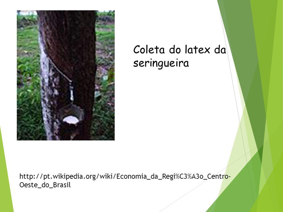 Extrativismo vegetal O extrativismo vegetal é uma atividade econômica importante sobretudo em áreas mais distantes dos grandes centros. Da imensa Flor