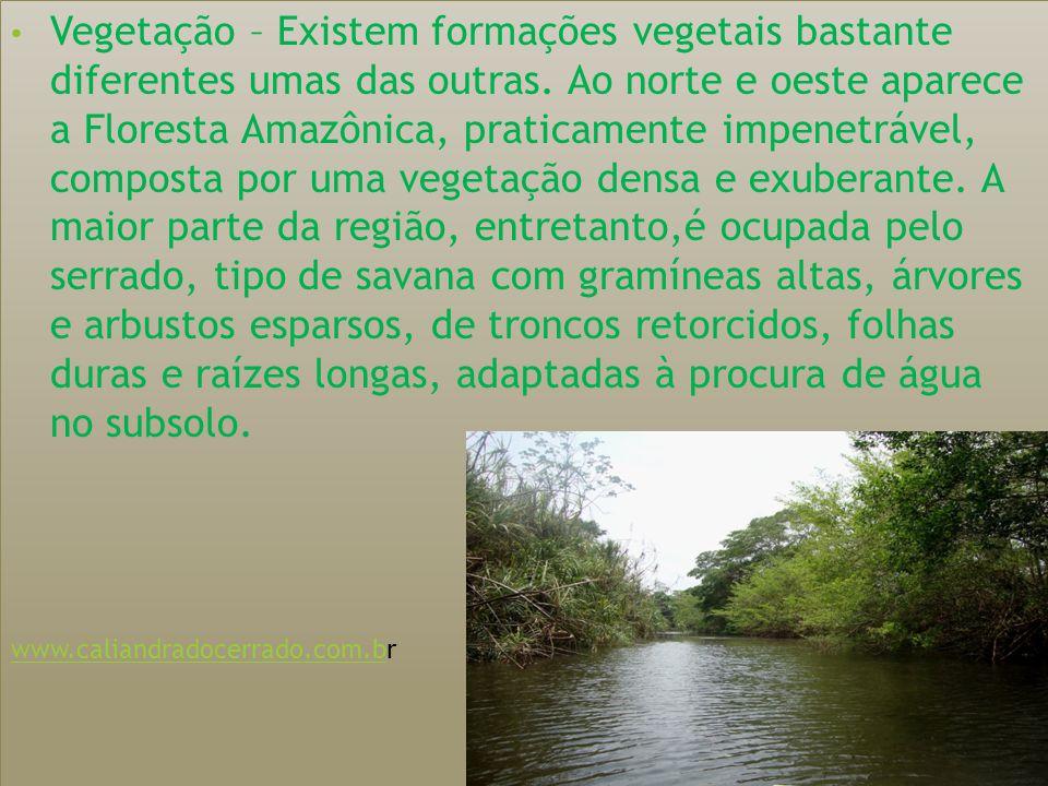 Vegetação – Existem formações vegetais bastante diferentes umas das outras.