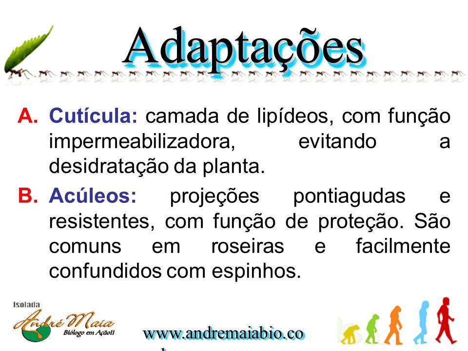 www.andremaiabio.co m.br A.Cutícula: camada de lipídeos, com função impermeabilizadora, evitando a desidratação da planta. B.Acúleos: projeções pontia