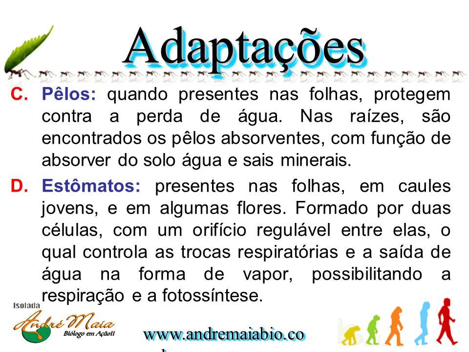 www.andremaiabio.co m.br C.Pêlos: quando presentes nas folhas, protegem contra a perda de água. Nas raízes, são encontrados os pêlos absorventes, com