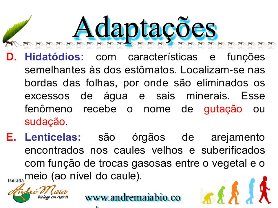 www.andremaiabio.co m.br D.Hidatódios: com características e funções semelhantes às dos estômatos. Localizam-se nas bordas das folhas, por onde são el