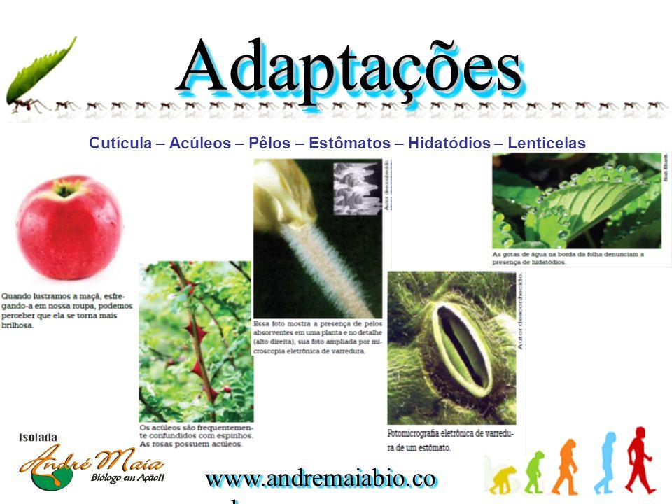 www.andremaiabio.co m.br Cutícula – Acúleos – Pêlos – Estômatos – Hidatódios – Lenticelas AdaptaçõesAdaptações