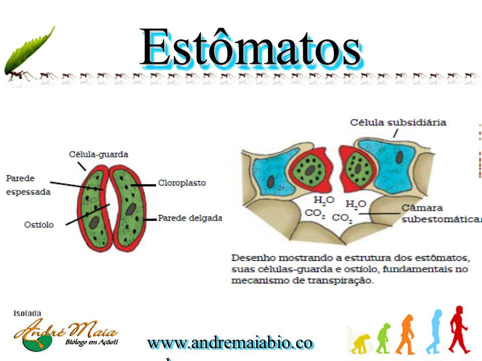 www.andremaiabio.co m.br EstômatosEstômatos