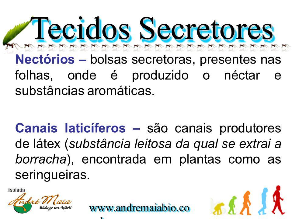 www.andremaiabio.co m.br Nectórios – bolsas secretoras, presentes nas folhas, onde é produzido o néctar e substâncias aromáticas. Canais laticíferos –