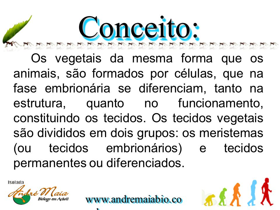 www.andremaiabio.co m.br Os vegetais da mesma forma que os animais, são formados por células, que na fase embrionária se diferenciam, tanto na estrutura, quanto no funcionamento, constituindo os tecidos.