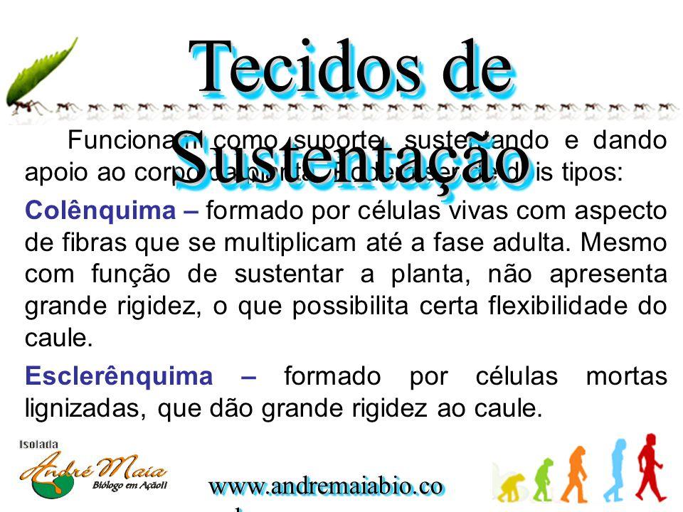 www.andremaiabio.co m.br Funcionam como suporte, sustentando e dando apoio ao corpo da planta. Podem ser de dois tipos: Colênquima – formado por célul