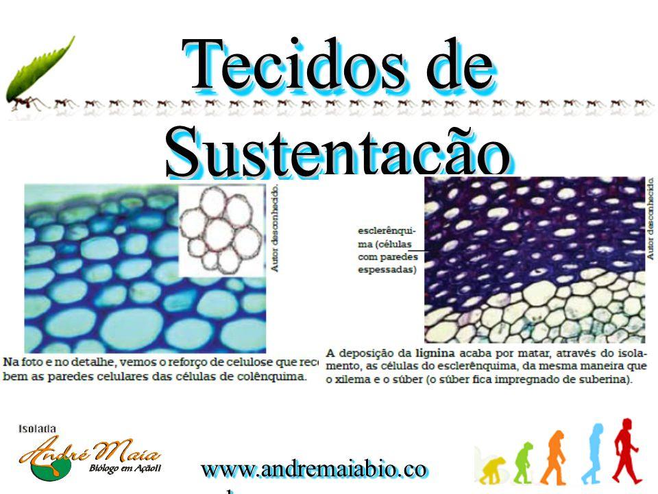 www.andremaiabio.co m.br Tecidos de Sustentação