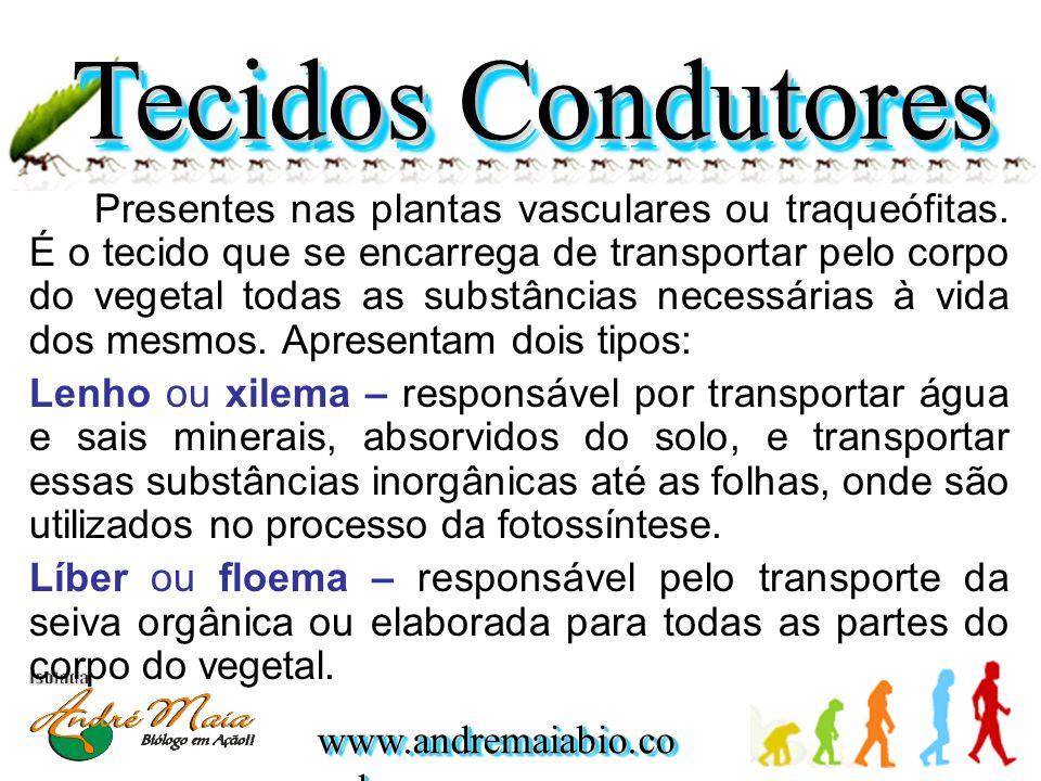 www.andremaiabio.co m.br Presentes nas plantas vasculares ou traqueófitas. É o tecido que se encarrega de transportar pelo corpo do vegetal todas as s