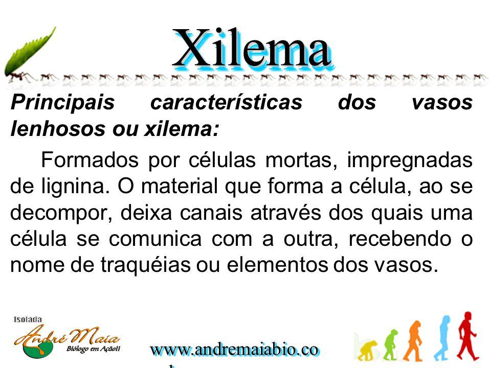 Principais características dos vasos lenhosos ou xilema: Formados por células mortas, impregnadas de lignina. O material que forma a célula, ao se dec