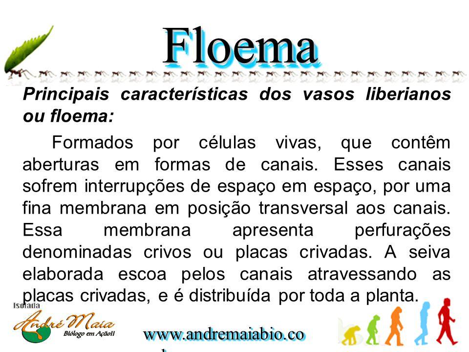 www.andremaiabio.co m.br Principais características dos vasos liberianos ou floema: Formados por células vivas, que contêm aberturas em formas de canais.
