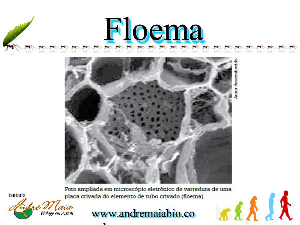 www.andremaiabio.co m.br FloemaFloema