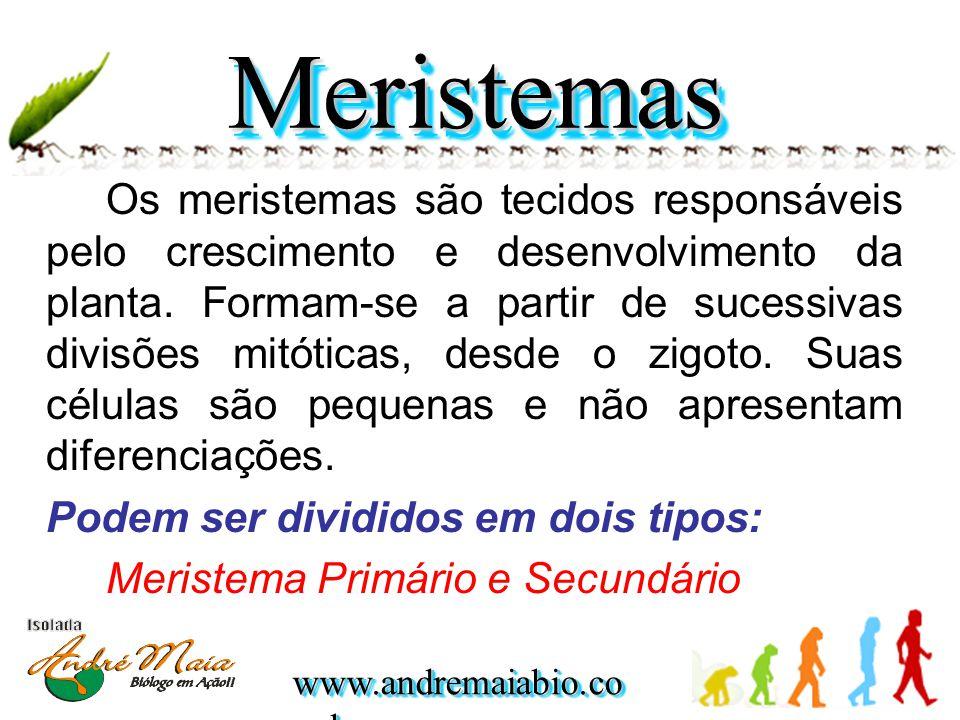 www.andremaiabio.co m.br Os meristemas são tecidos responsáveis pelo crescimento e desenvolvimento da planta. Formam-se a partir de sucessivas divisõe