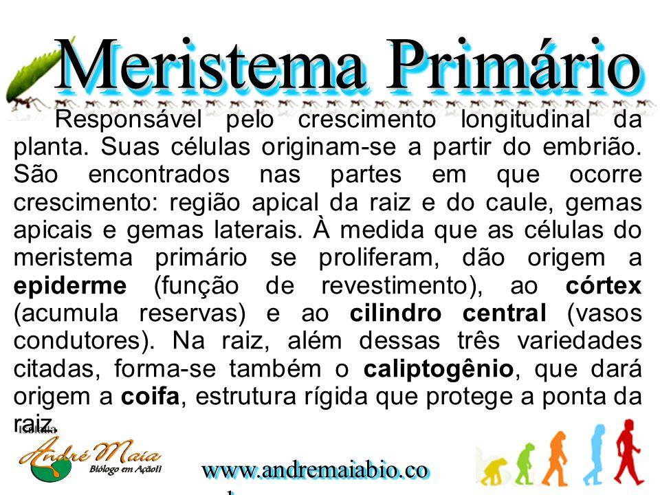 www.andremaiabio.co m.br Responsável pelo crescimento longitudinal da planta. Suas células originam-se a partir do embrião. São encontrados nas partes