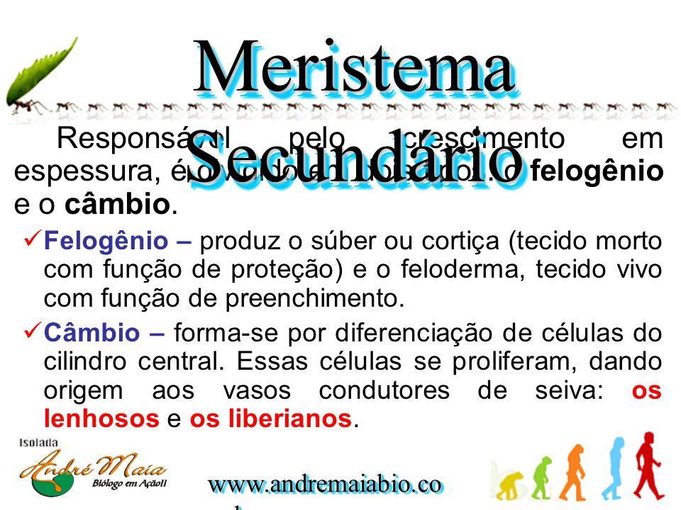 www.andremaiabio.co m.br Responsável pelo crescimento em espessura, é dividido em dois tipos: o felogênio e o câmbio. Felogênio – produz o súber ou co